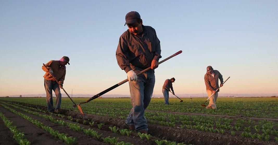 vender mais na loja agropecuária: trabalhadores na lavoura