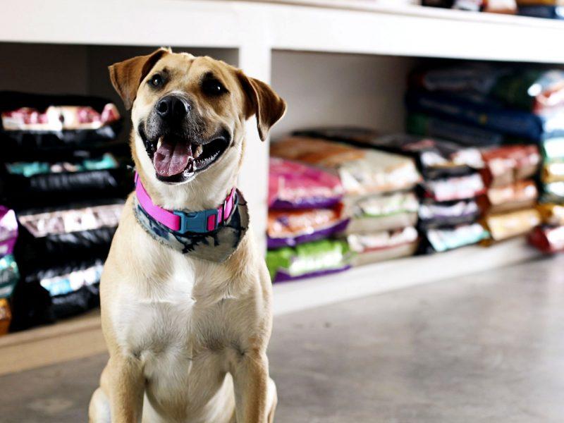 Feriados e pontos facultativos: cachorro em loja de departamento canino