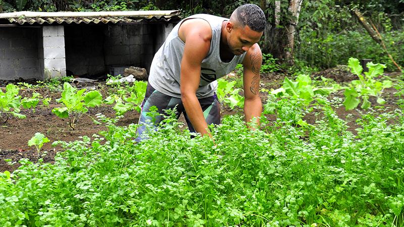 Em uma terra, há um homem de regata mexendo em plantação que parece ser uma horta.
