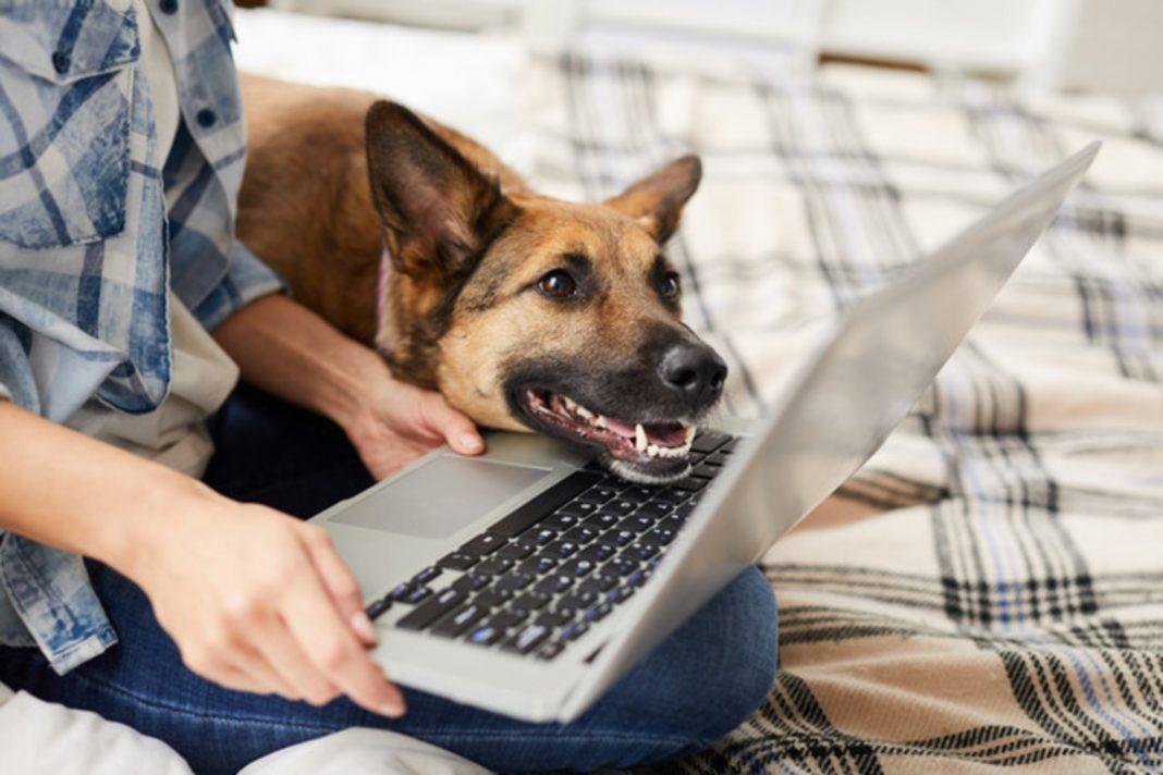 Mãos de uma pessoa segurando um laptop acompanhada por um cachorro.