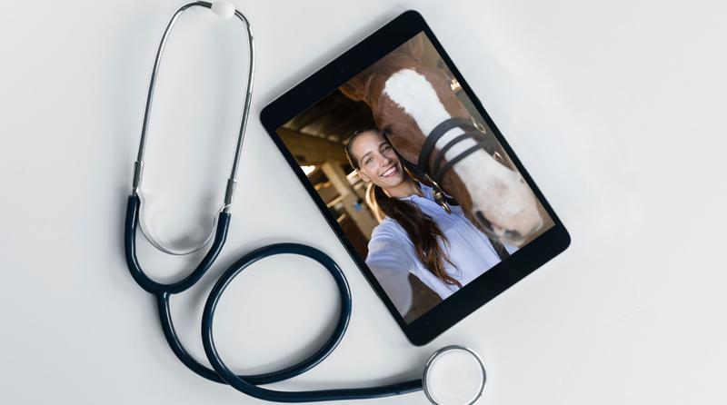 Tablet em videochamada com uma mulher e seu cavalo. Ao lado um estetoscópio.