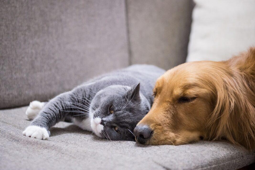 gato e cachorro dormindo no sofá