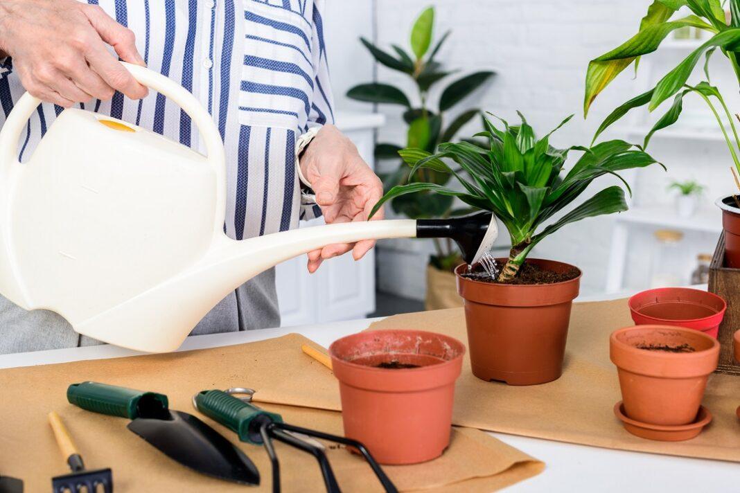 mulher regando plantas em vasos em casa
